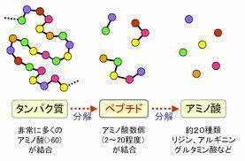 界面活性剤のタンパク質変性(前編) ~タンパク質について~