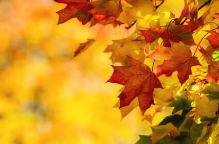 秋の乾燥・肌荒れ期 ~原因と対処~
